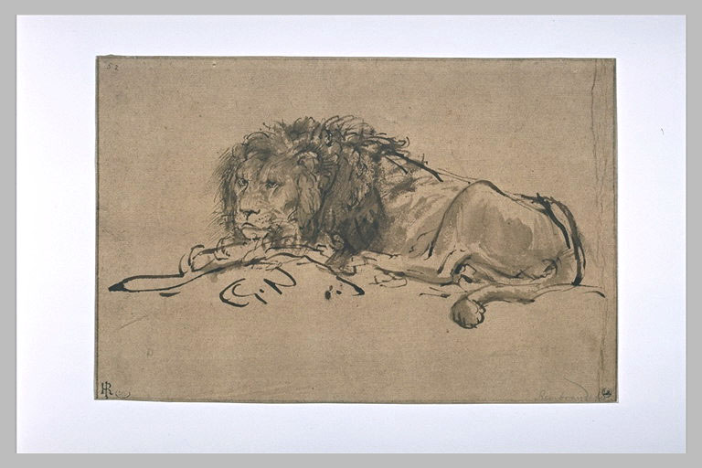 Rembrandt, Reclining lion. Paris, Louvre
