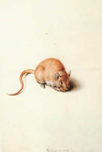Jacques de Gheyn, Field mouse. Paris, Collection Frits Lugt