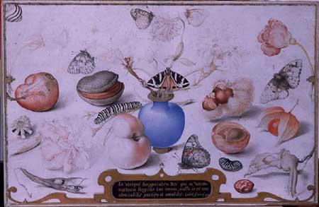 Joris Hoefnagel, Still life with snail. Sibiu, Brukenthal Museum