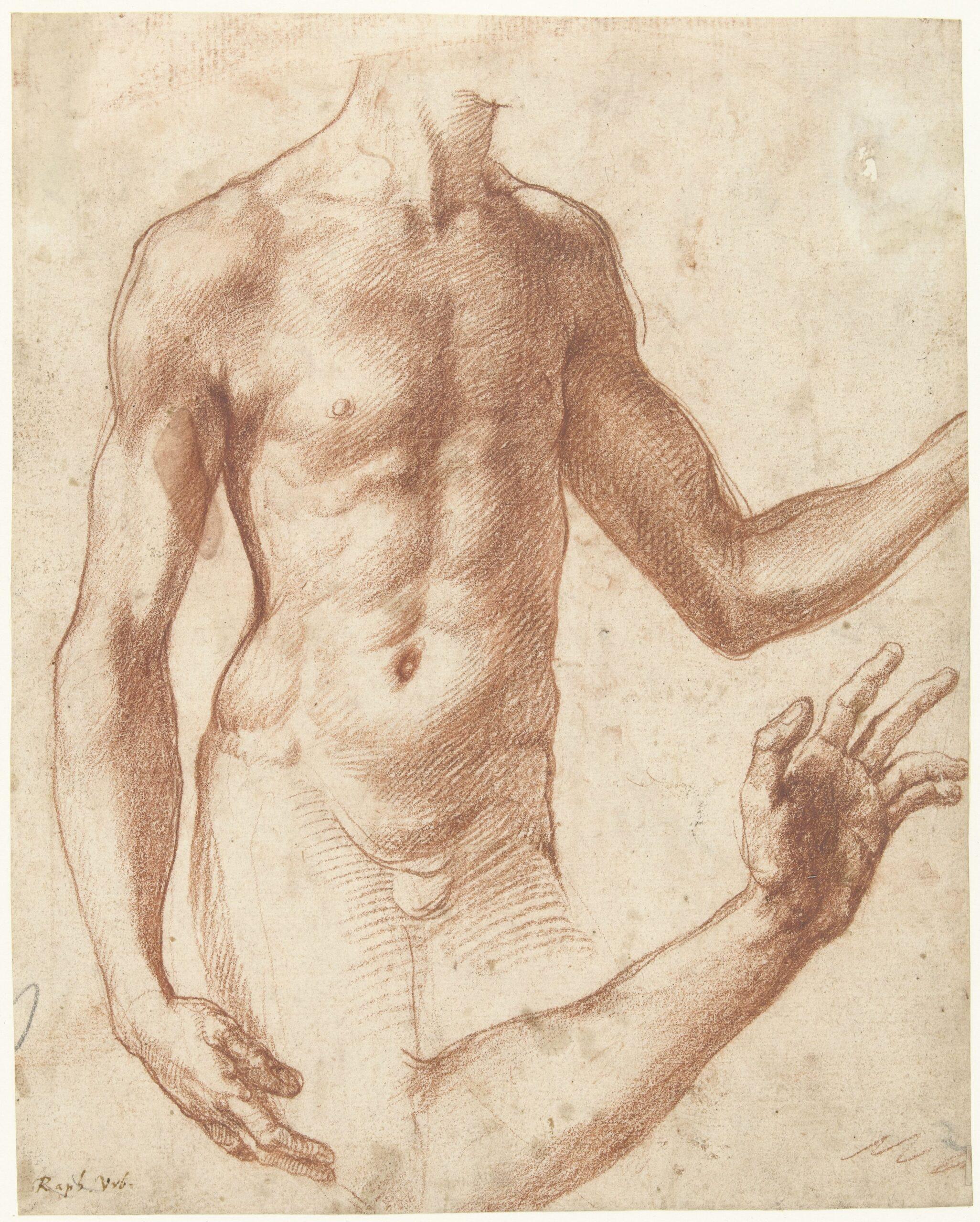 Perino del Vaga (1500-1547), Study of a torso, ca. 1511-34Rijksmuseum, Amsterdam
