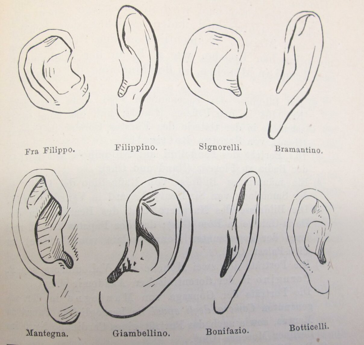 Comparison of ears by Giovanni Morelli (1816-1891)