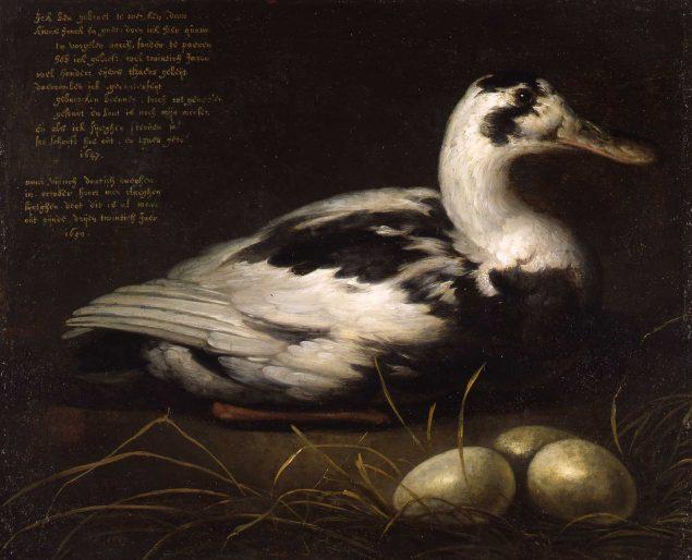 Albert Cuyp (1620-1691), Syctghen the Duck, 1647 Dordrechts Museum, Dordrecht