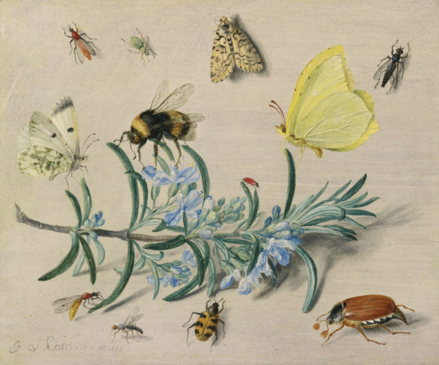 Jan van Kessel, Insects and a Sprig of Rosemary, 1653 National Gallery of Art, Washington