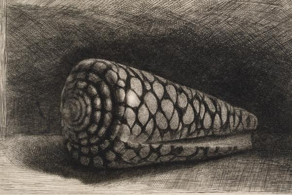 Rembrandt (1606-1669), The Shell1650 The Ashmolean Museum, Oxford